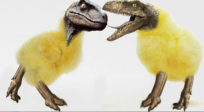 Jurassic Park! Científicos crearon pollitos dinosaurio en ...